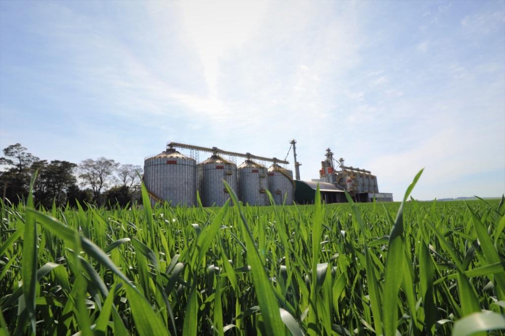 Lavouras de trigo apresentam bom desenvolvimento no RS