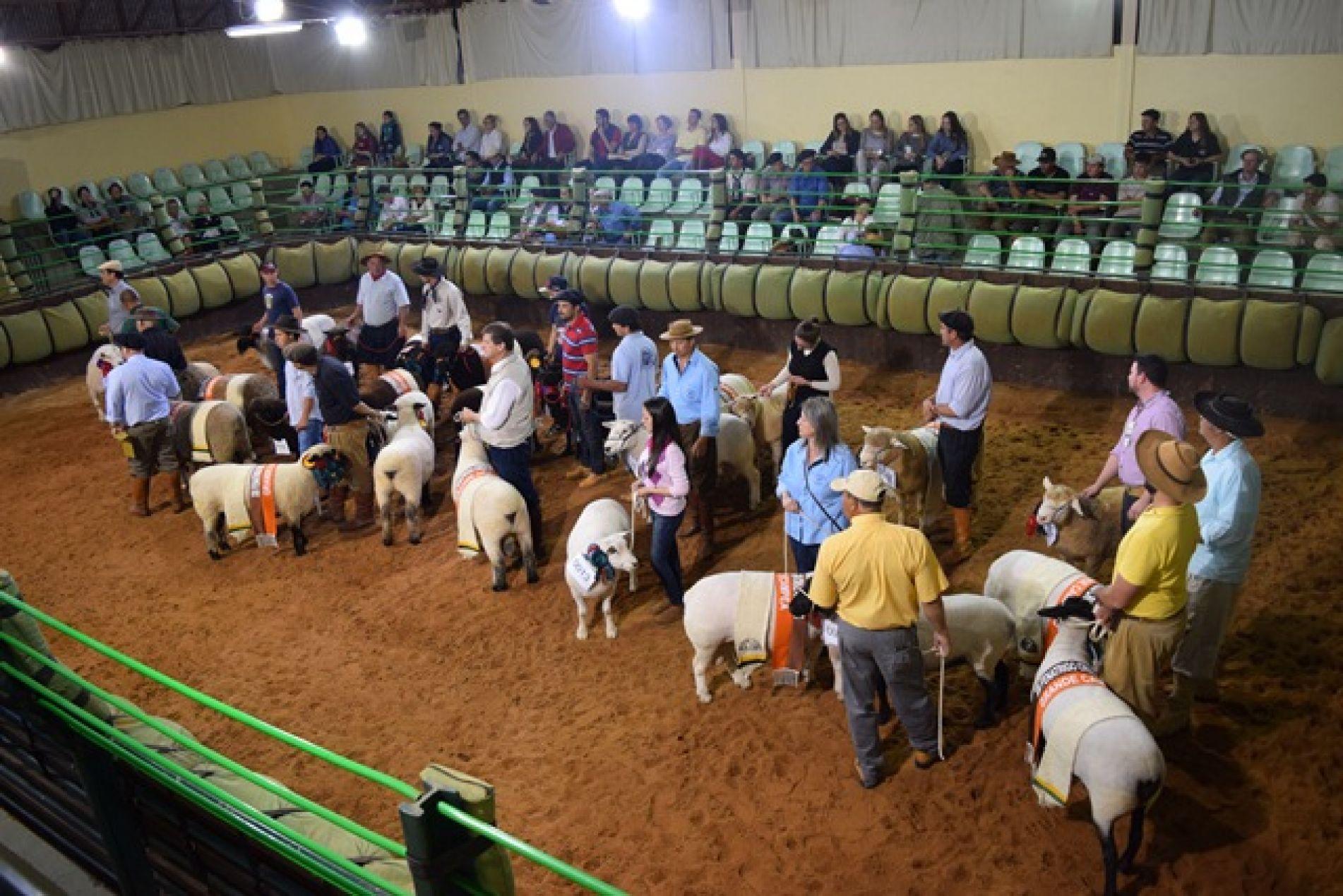 Com aproximadamente 250 ovinos, a exposição contou com anima